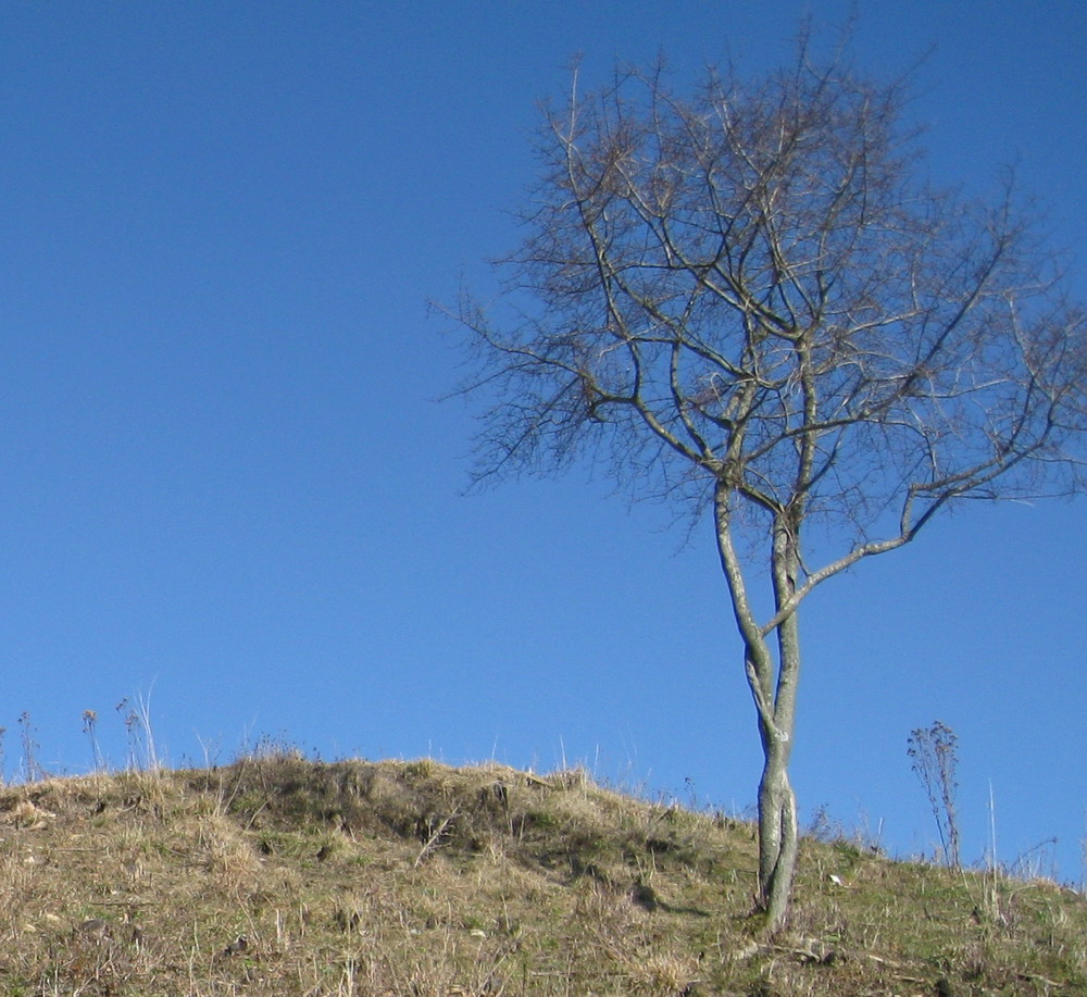 Georgenberg Pfullingen: Baumskulptur