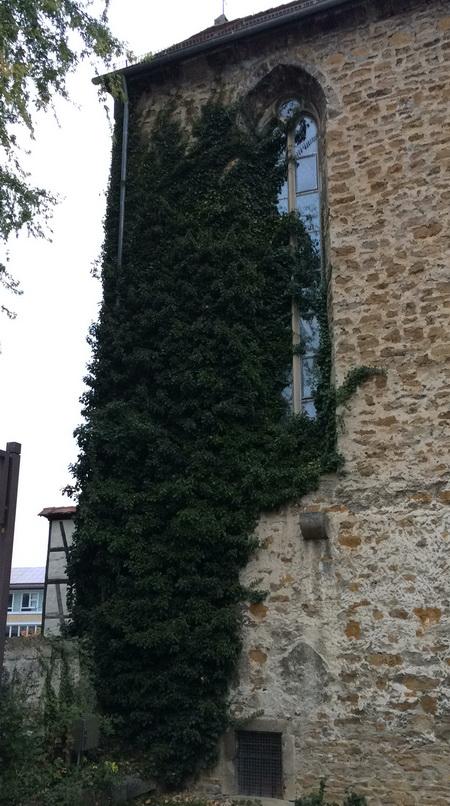 Klosterkirche: Seit Jahren sicherheitstechnisch kultureingeschränkt. Und nun scheint man sie zuwachsen zu lassen, um das Elend unsichtbar zu machen...